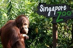 6 in 1 Sentosa Package: $82.73 Per Adult (U.P. $124) or $62.73 Per Child (U.P. $87) from Travel Delightfully via Groupon