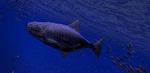 Be a Fish: VR Simulator - free on Google Play