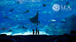 50% off Second Adult Ticket at Sea Aquarium with NTUC Card